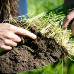 The Amazing Ability Of Pasture Grass To Sequester Carbon